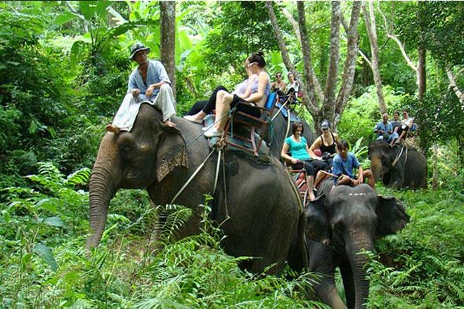 Khao Sok Jungle and Elephant Safari Tours