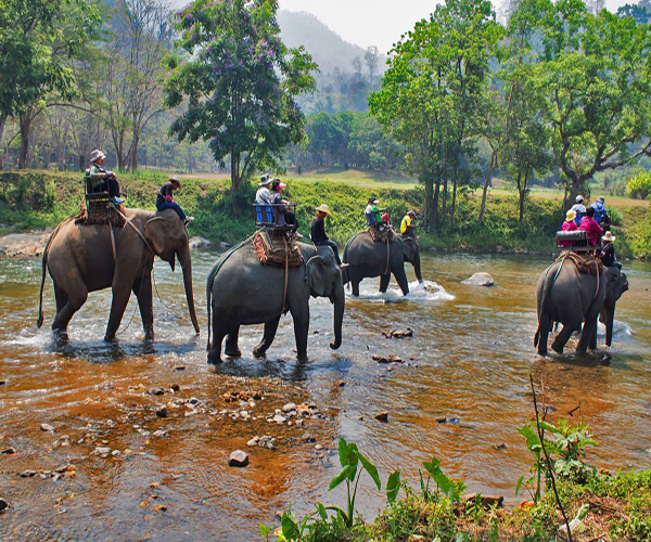 Private Khao Sok Safari Tour